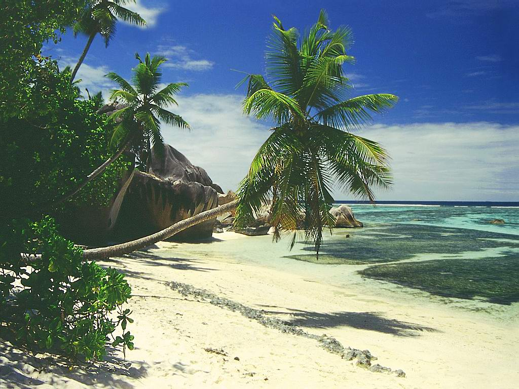 Free Palm Trees On The Beach Wallpapers and Palm Trees On The Beach