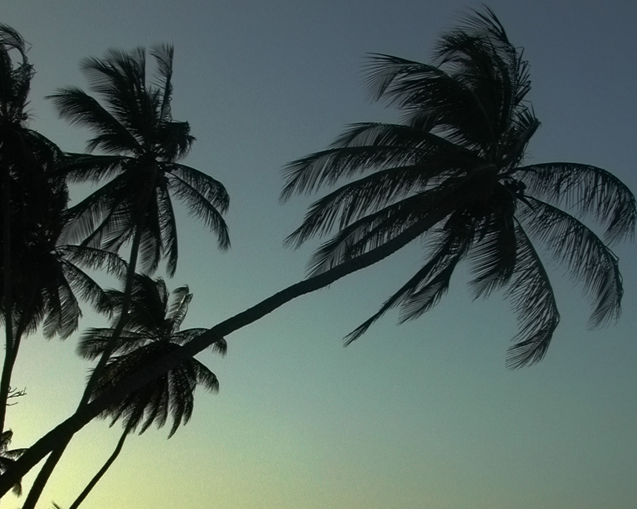 Palm trees leaning into the sky