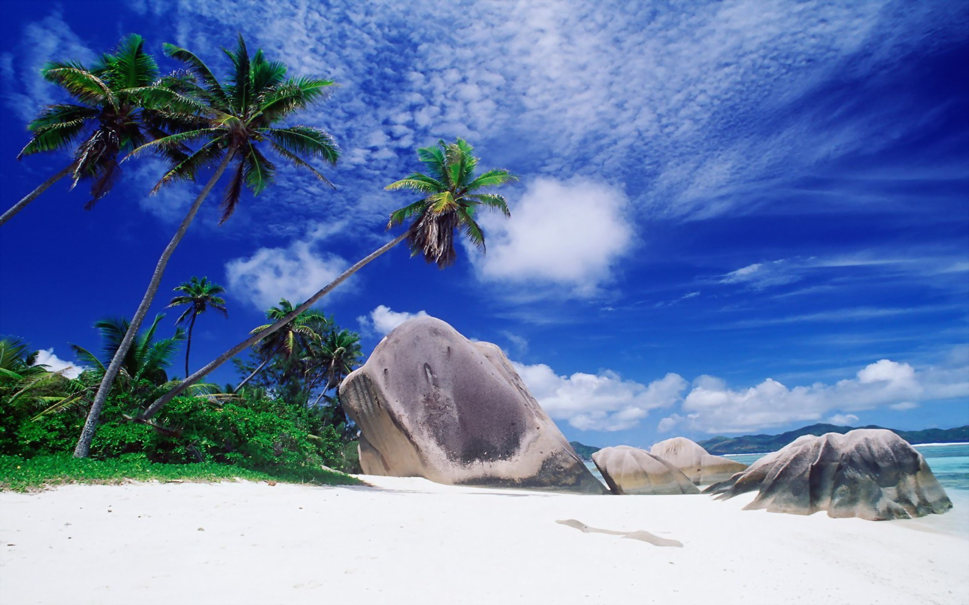 Rocks and palm trees on the beach wallpaper