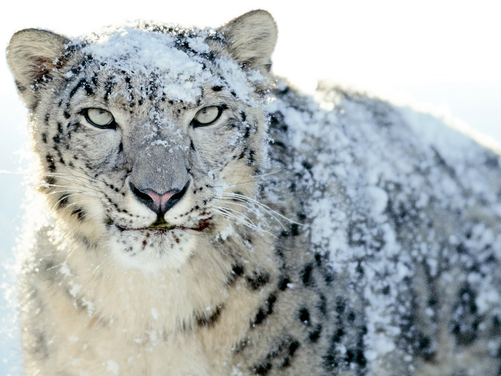 Abstract Animated Wallpaper Mac Os X Snow Leopard Wallpaper
