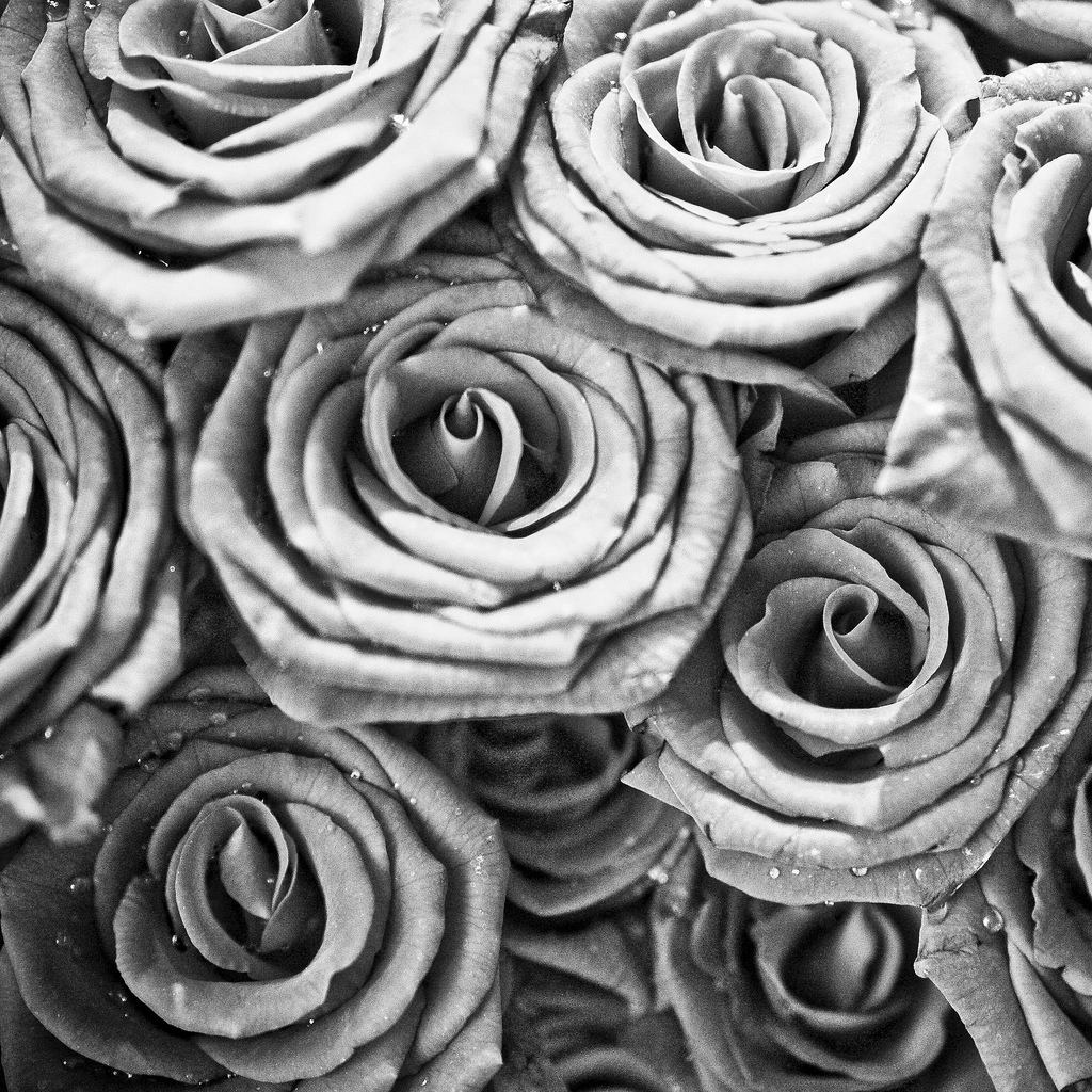 Abstract Rose Wallpaper Abstract Free Wallpaper White