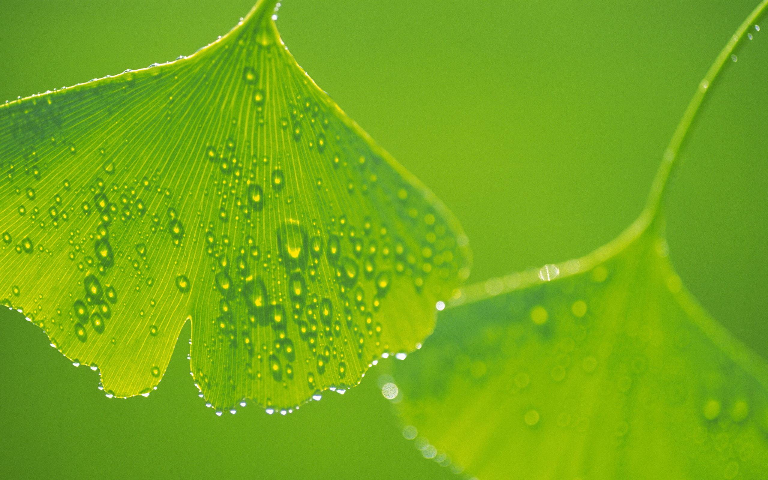 Green Abstract 1080p Wallpaper 1920x1080 Natur #7869 Hd ...
