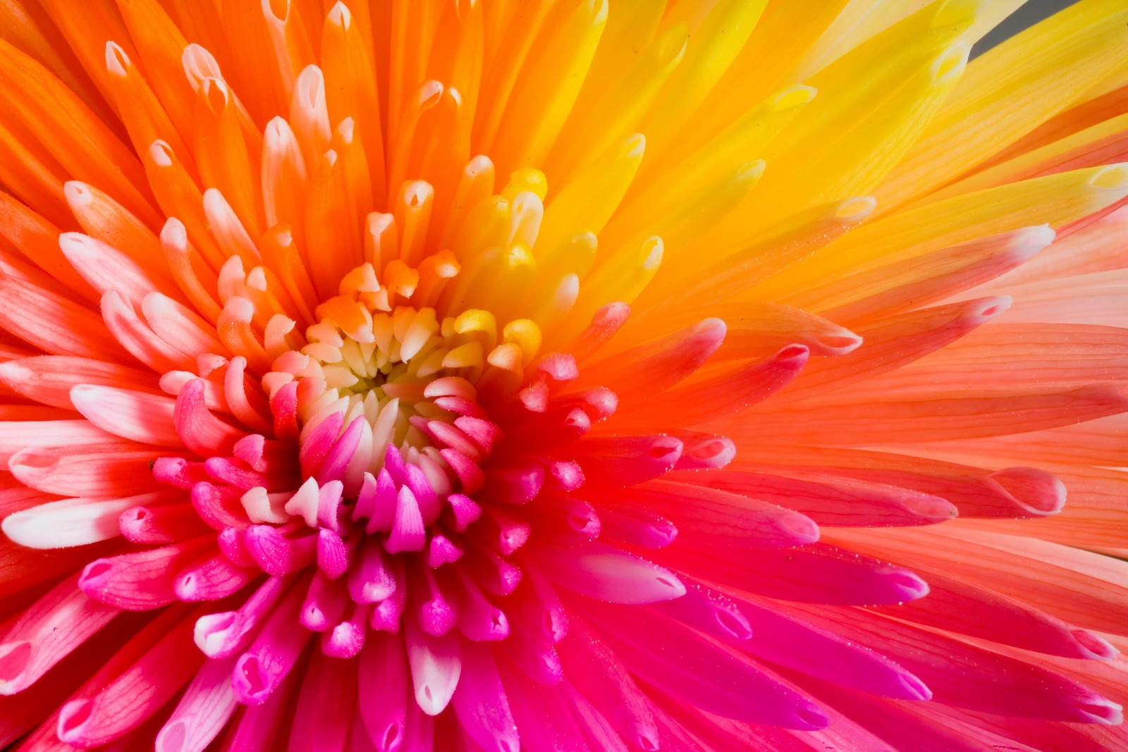 Colorful Flower Backgrounds Wallpaper