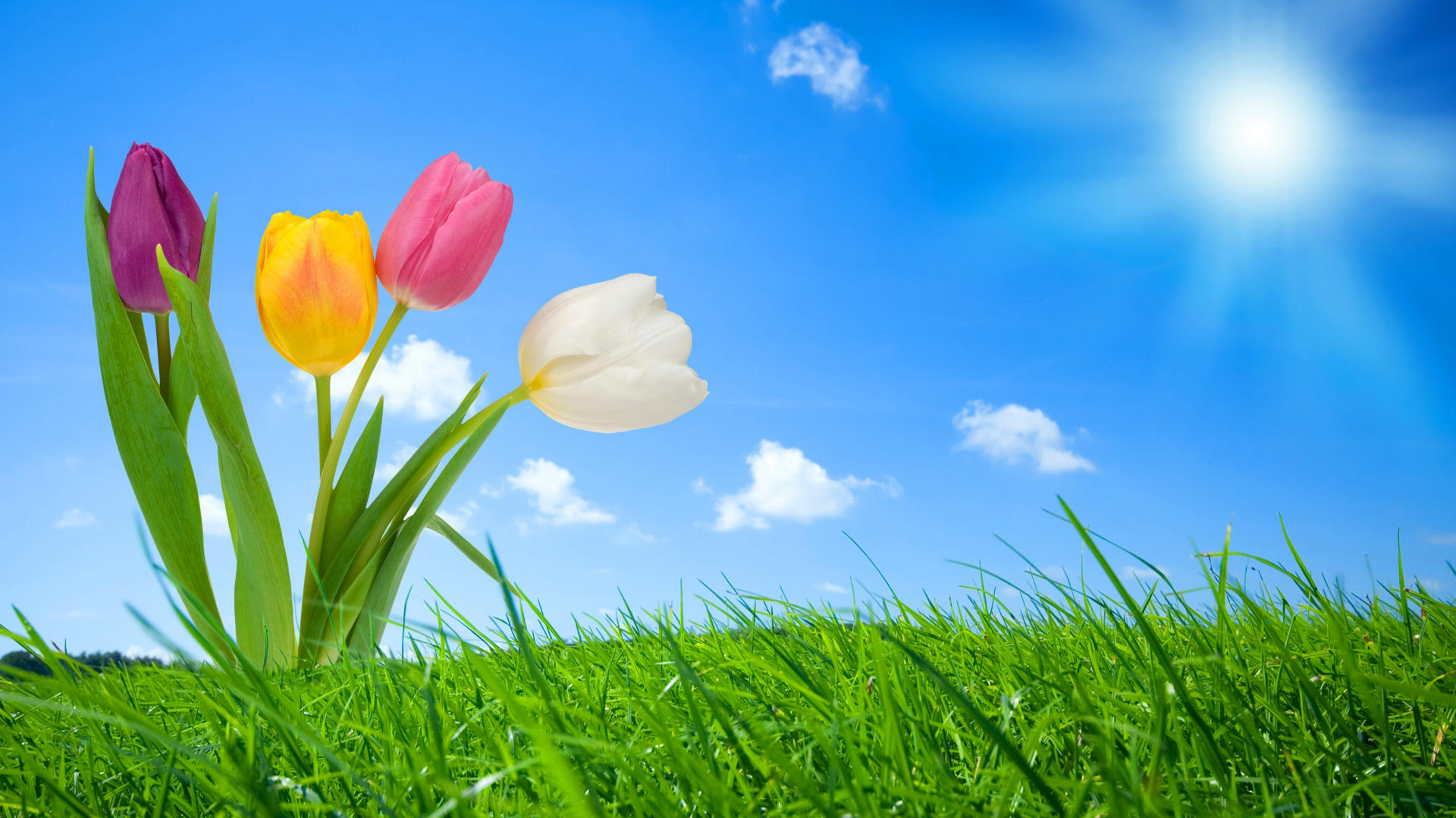 free spring wallpaper for computer 29836 hd wallpapers