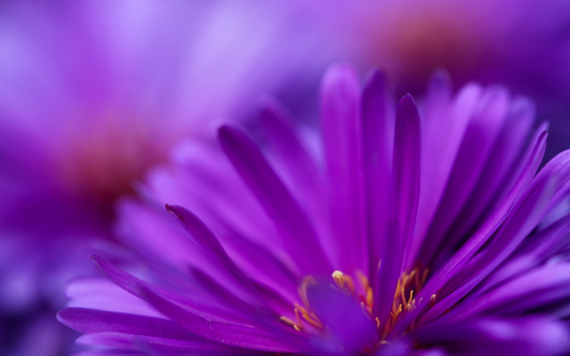 Purple Flowers Wallpaper Wallpaper