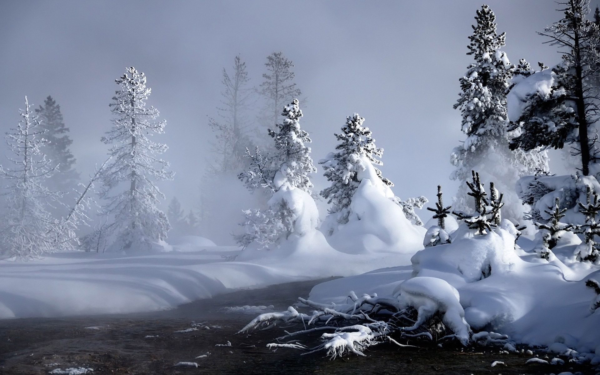 Winter Widescreen Wallpapers Wallpaper