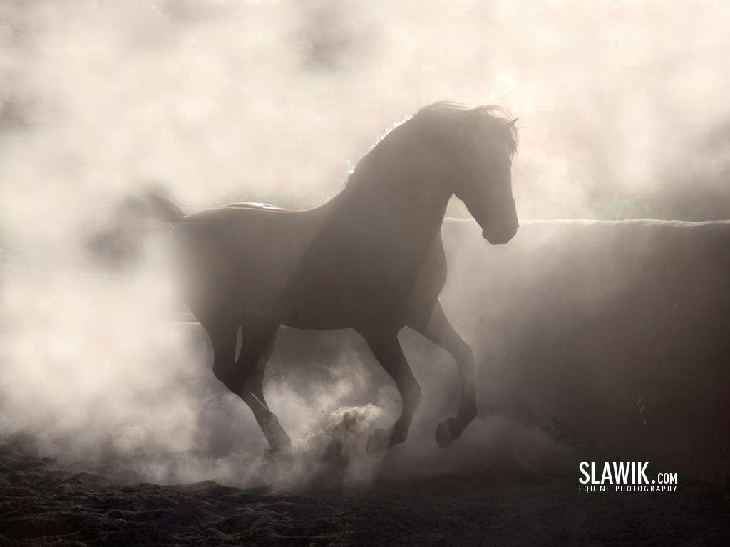Horses Slawik horse wallpapers Wallpaper