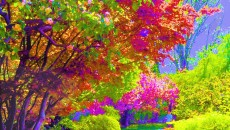 Painting Of Colorful Trees – Wallpaper – 1600 x 1280 Wallpaper