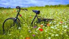 wallpaper bicycle fragrant wallpapers image Flower HD Wallpaper