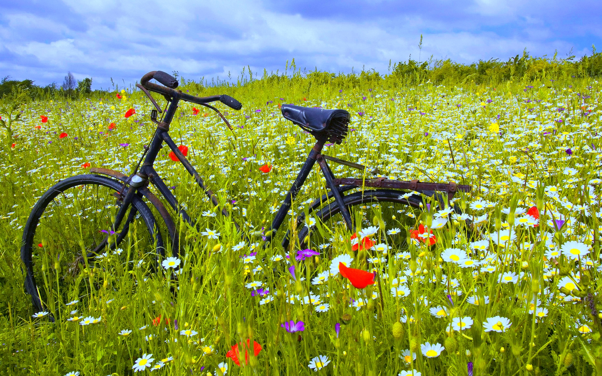 wallpaper bicycle fragrant Flower HD Wallpaper Wallpaper