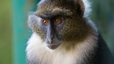 Baboon Photos, Free Animal Pictures