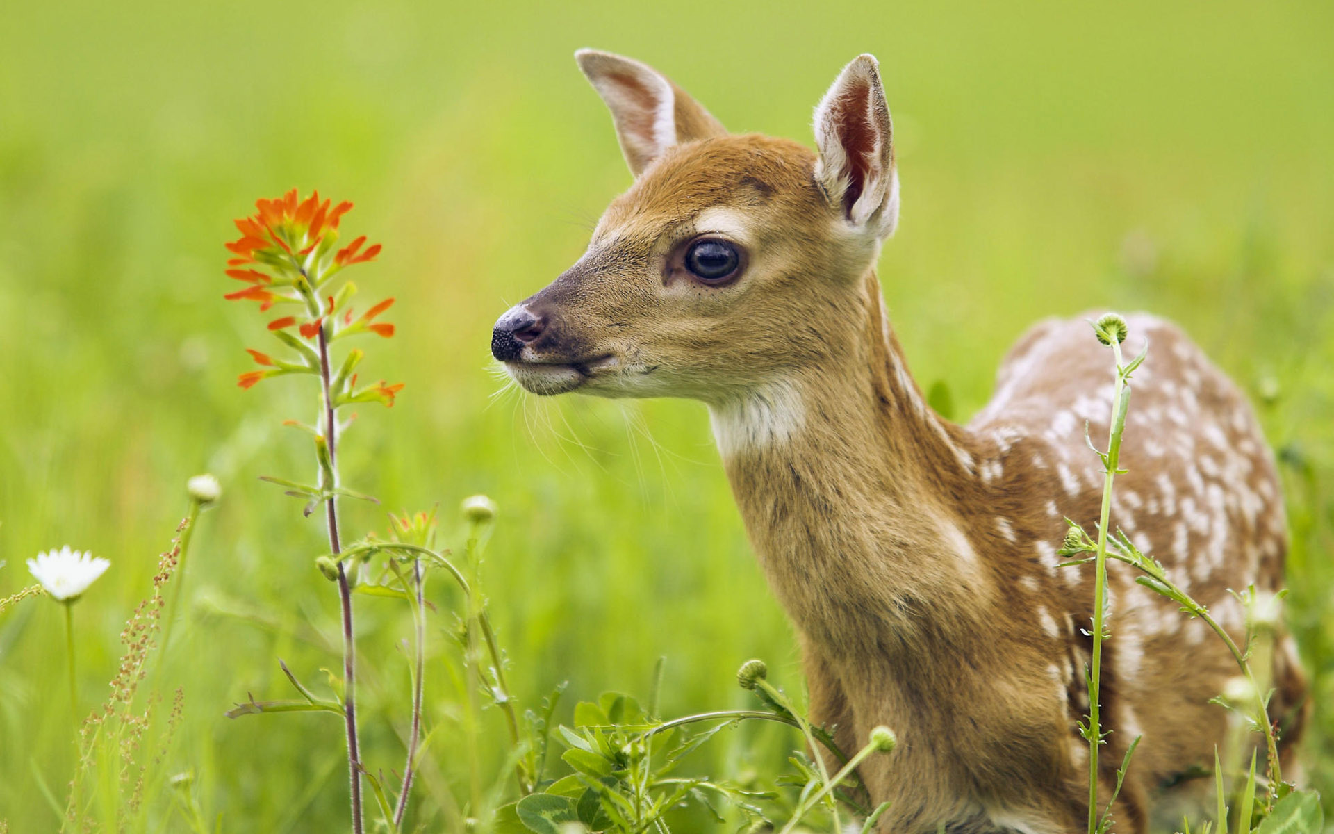 New Amazing Deer hd Animal Wallpaper Wallpaper