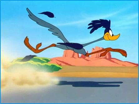 New Road Runner Cartoon Hd Wallpaper Wallpaper