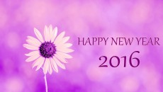 Happy New Year 2016 Flower Images HD Wallpaper #04581 | HD WALLPAPER