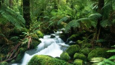 Tropical Rain Forest | New High Definition Wallpapers