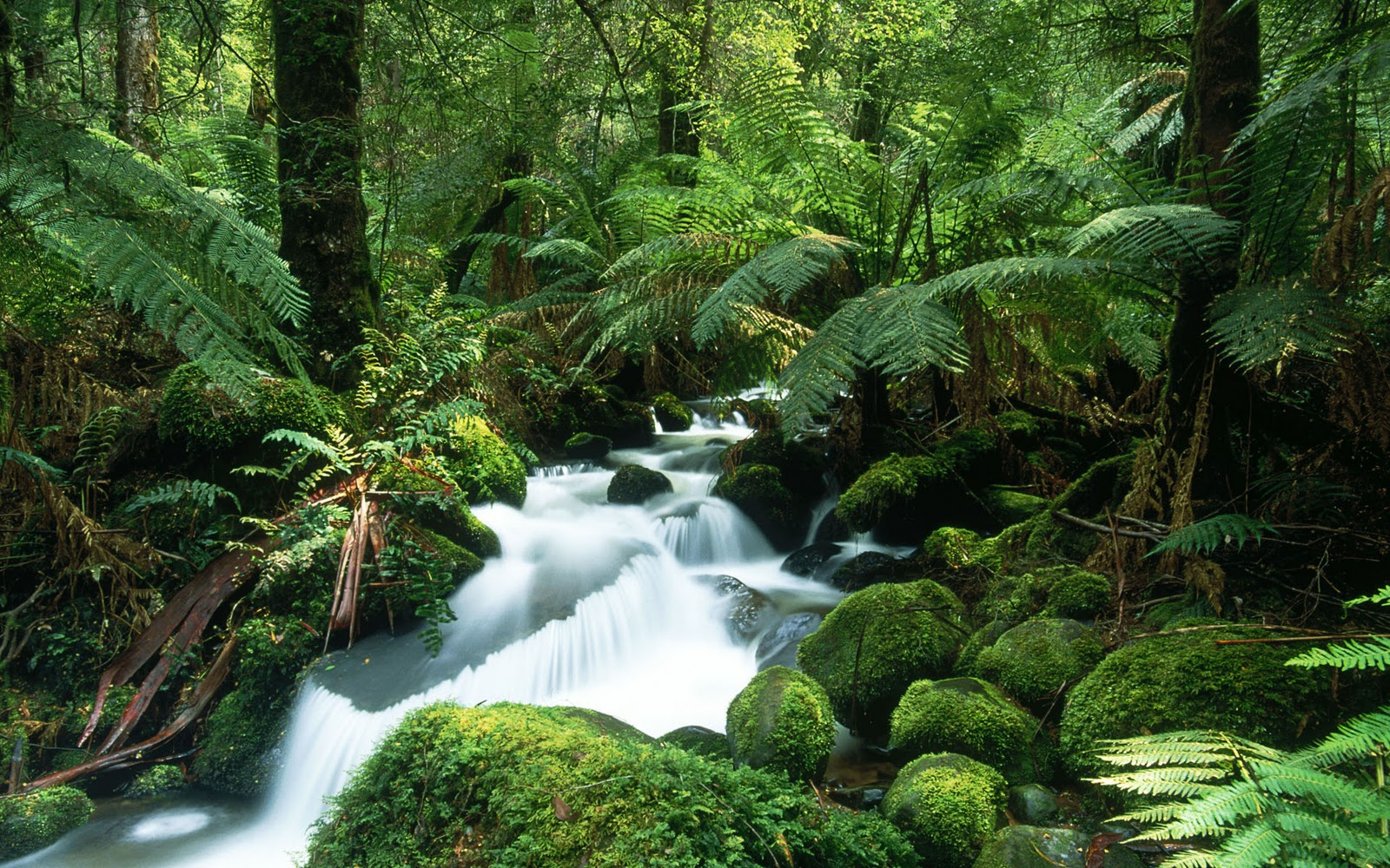 New Amazing Rainforests  hd wallpaper Wallpaper