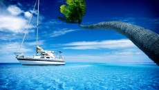 Sailing Palm Ocean Wallpapers Pictures Photos Images