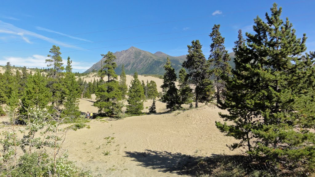 Carcross Desert HD Wallpaper Wallpaper