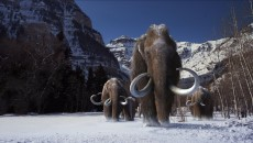 Woolly Mammoth, Anyone?