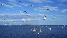 Birds on Sea Wallpapers | HD Wallpapers