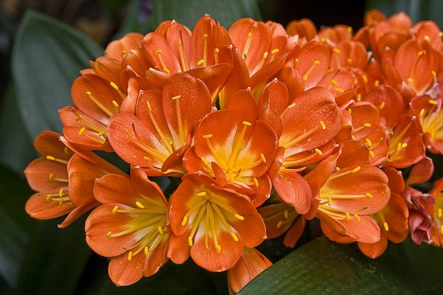 Orange blossom New HD Wallpaper Wallpaper