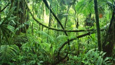 World Visits: Tropical Rainforests - Green Plants On The Earth