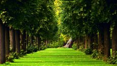 Beautiful Green Forest Wallpaper Desktop Wallpaper with 2560x1600