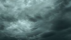 Bird under the storm clouds wallpaper