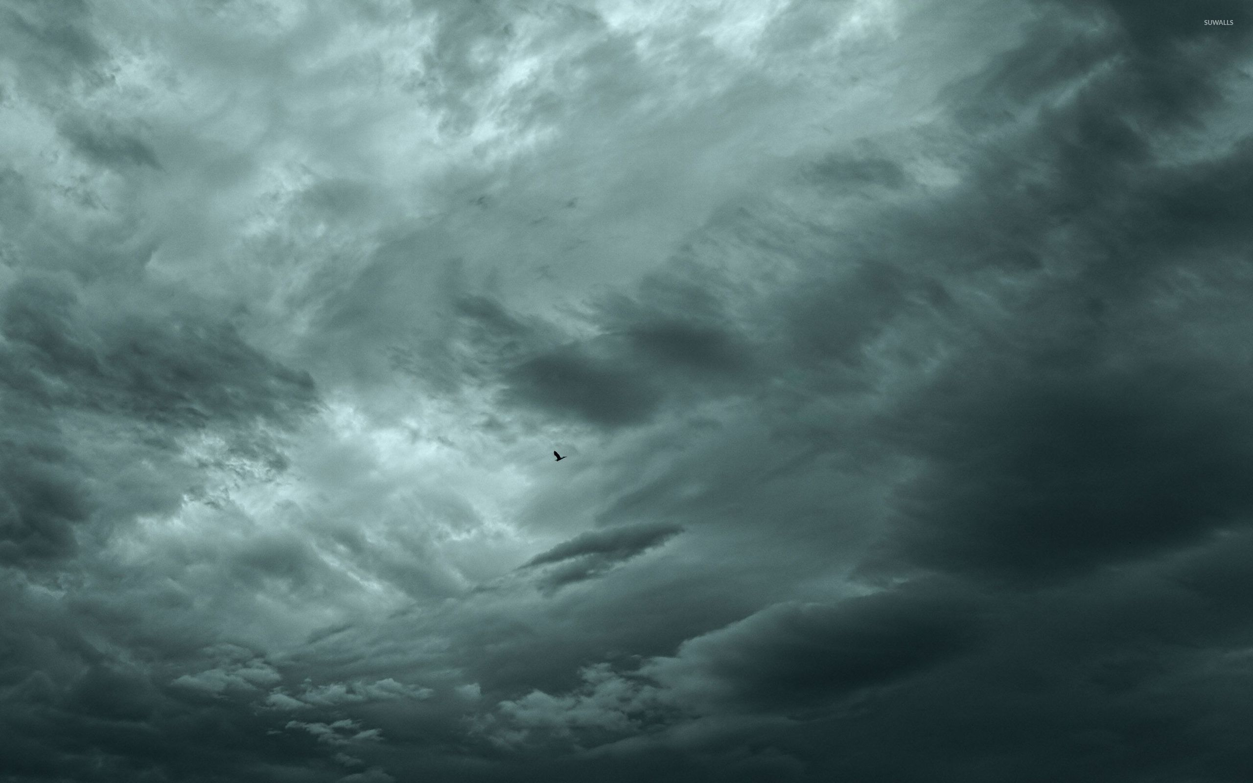 Bird under the storm clouds wallpaper Wallpaper